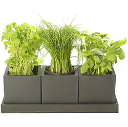 Beau Small And Simple, Modern Herb Garden.